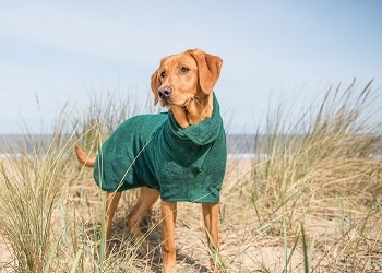 Hondendroogjas groen van het merk Ruff and Tumble voor natte hond