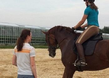 Proefgericht en paardvriendelijk dressuur trainen met hulp van een KNHS jury